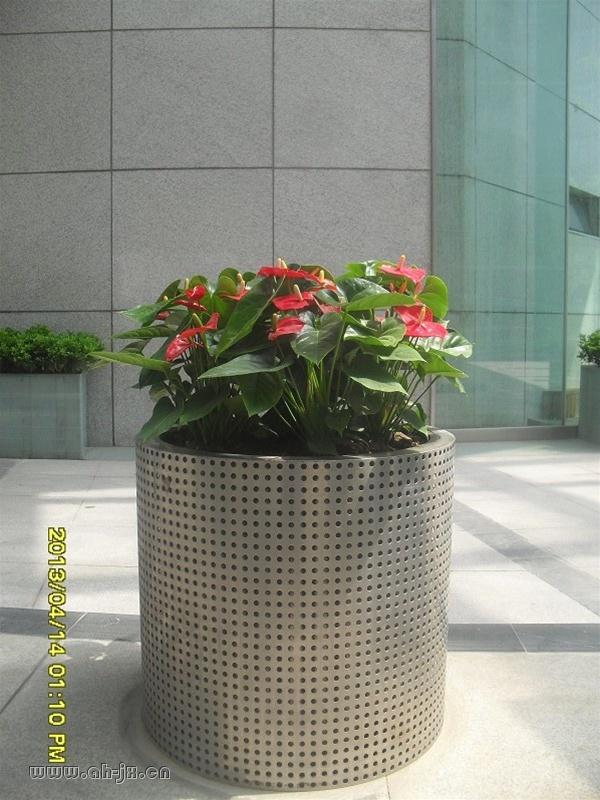 合肥景绣花卉