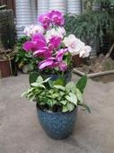 景绣园艺花卉