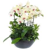合肥园艺花卉