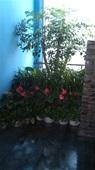 组合造型盆栽