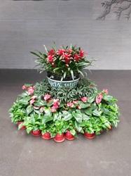 客户摆放组合花卉