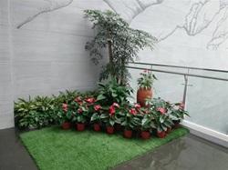 大厅一角花卉组合摆放